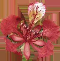 kauneushoitola phuong